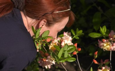 Екзотика вдома: дружківчанка вирощує сад з екзотичними рослинами