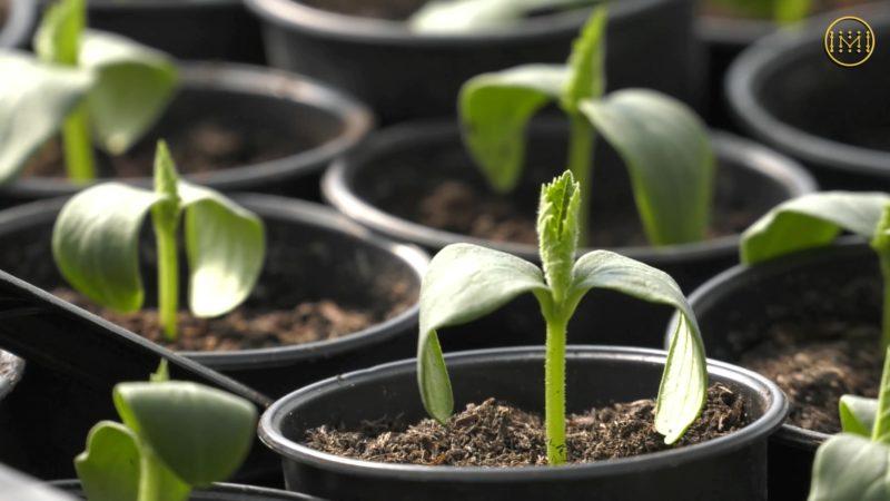 Жителька Іллінівської громади планує створити кооператив з вирощування та перероблення городини
